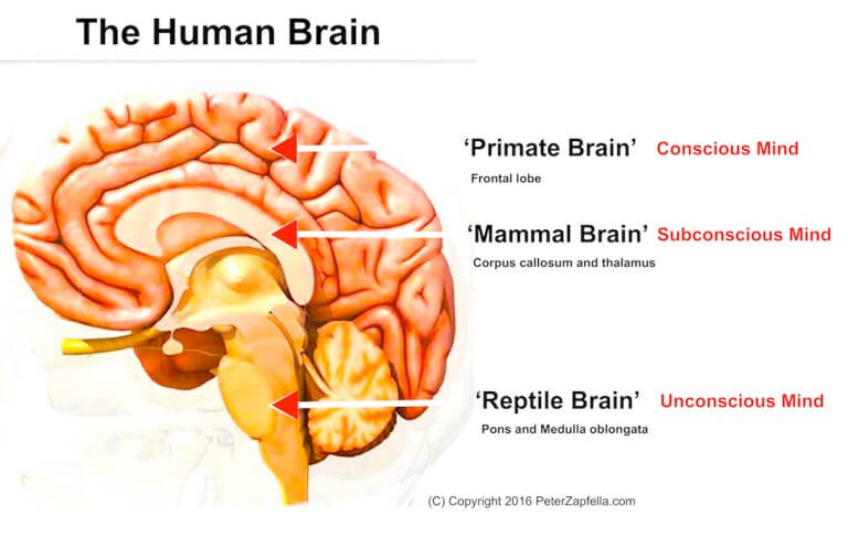 The-Human-Brain min, Welcome No Anger, - www.InternetHypnosis.Shop